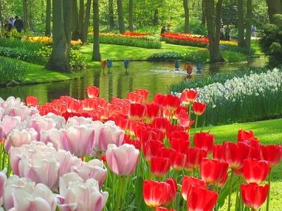 5 Tempat Wisata Di Belanda Yang Terkenal Menarik Dan Wajib Dikunjungi, Amsterdam, Rotterdam Atau Den Haag